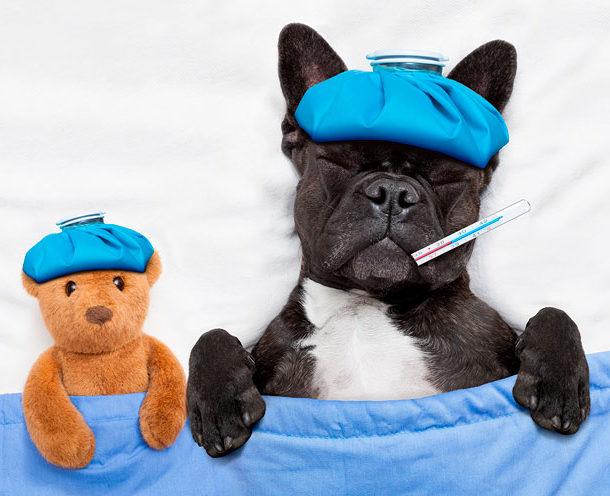 Gripe y Quiropráctica