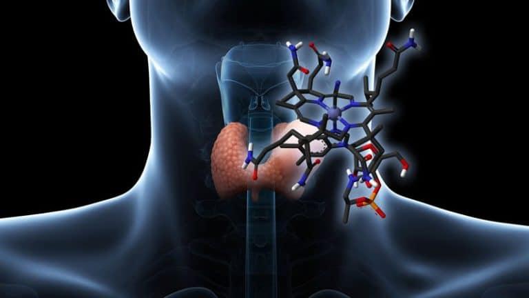 La quiropráctica y las funciones hormonales: tiroides