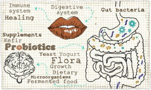 La flora intestinal, un regulador implacable de nuestro sistema inmune.